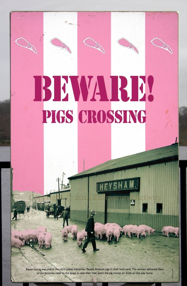 2013-02-13 PigsCrossing+