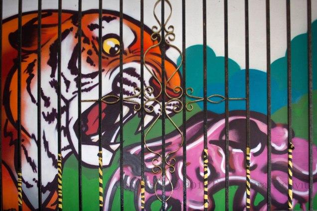 03481 2016-05-26 Caged Tiger+